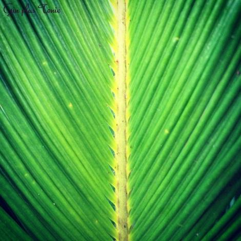 greenish four
