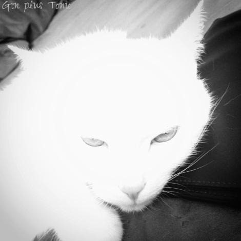 09 feline love